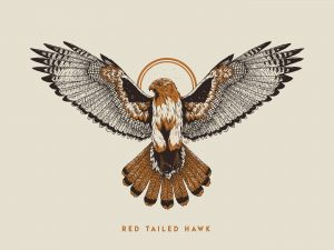 Red Tail Hawk by Logan Schmitt Illustration for Red Tail Design Company, ©2018