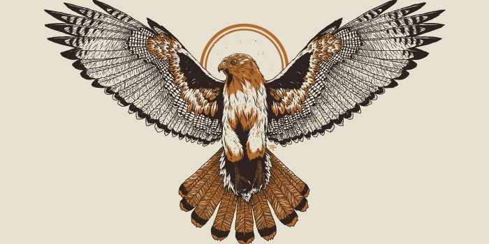 Logan Schmitt Red Tailed Hawk illustration
